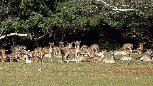 По территории парка свободно разгуливают дикие животные